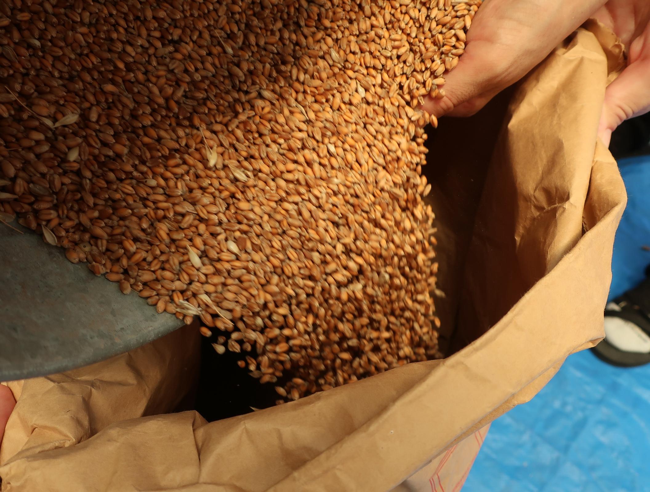 【ウルトラファームより】小麦の種まき